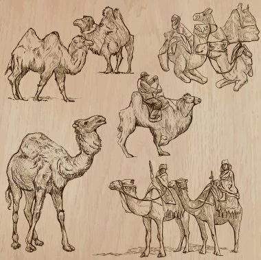 Camels - An hand drawn vectors. Converted