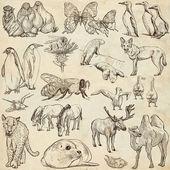 Tiere - Freihandskizzen auf altem Papier
