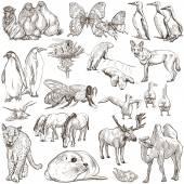 Tiere - freihändige Skizzen auf weiß