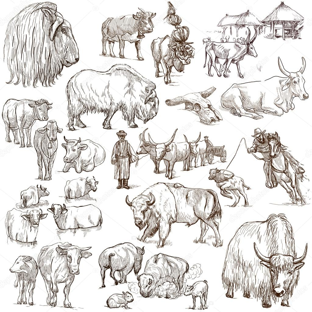 Cows And Cattle Pack Of Animals Hand Drawings Stock Photo