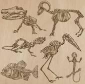 Kostí, lebek, kostry - freehands, vektor