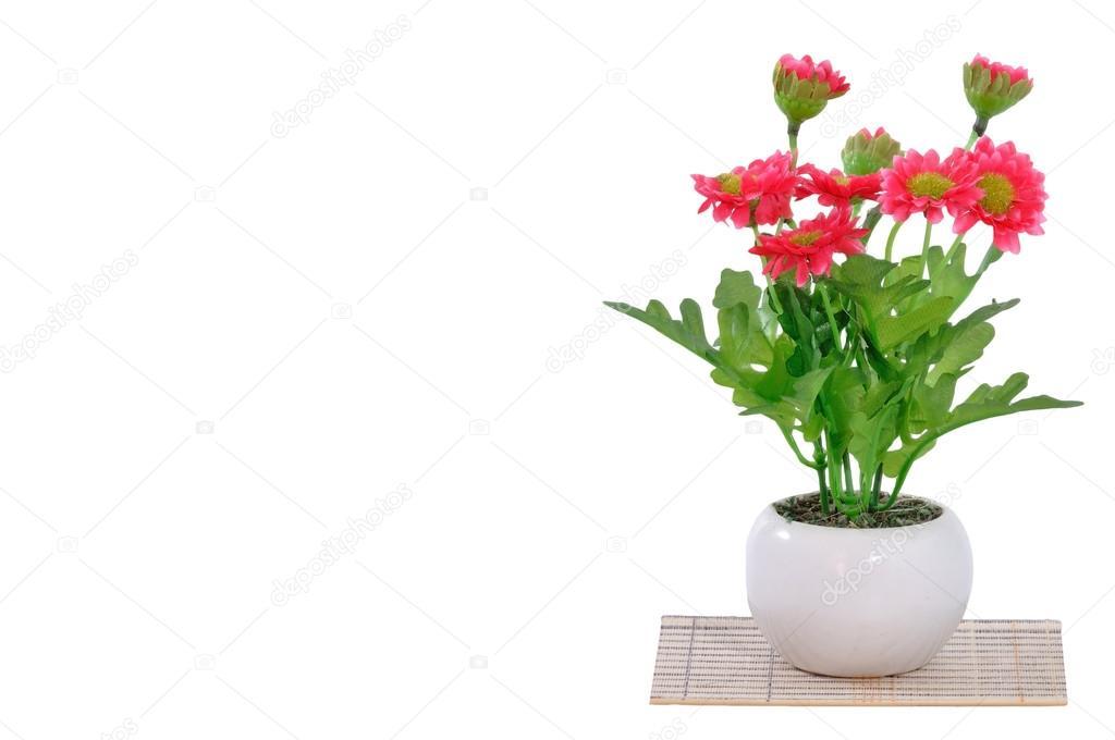 Blumen im Topf weiß — Stockfoto © ekarina #81188142