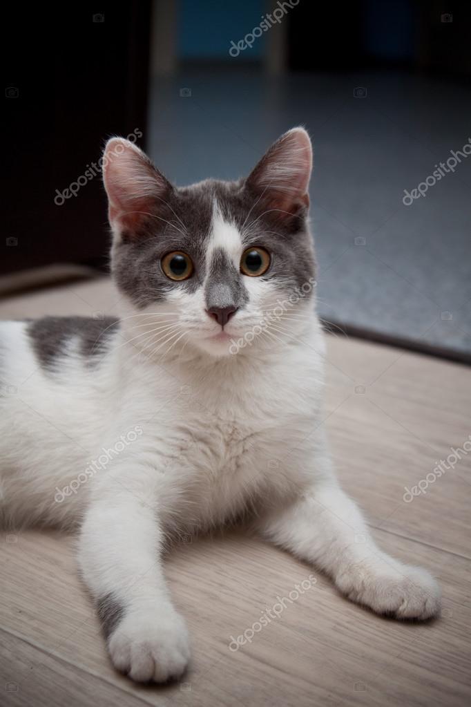 blanc les adolescents chatte pics sexy adolescent filles
