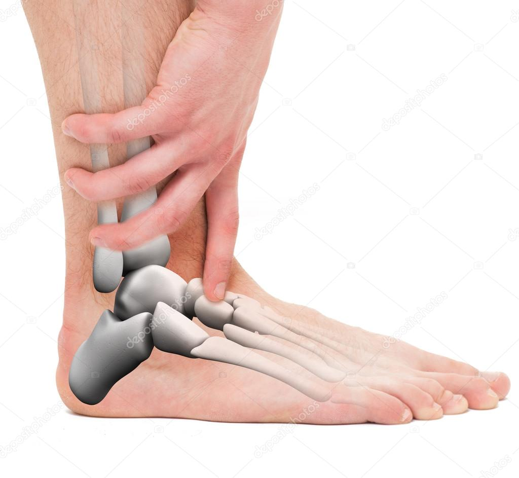 Ankle Bones - Anatomy Male — Stock Photo © decade3d #110852936