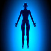 Full Female Body - Back View - Blue concept