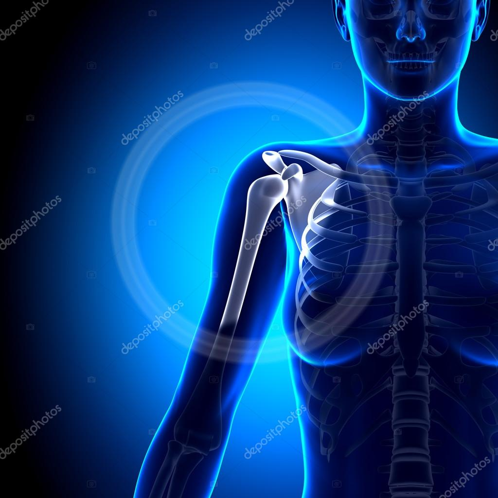 Female Shoulder Scapula Clavicle Anatomy Bones Stock Photo