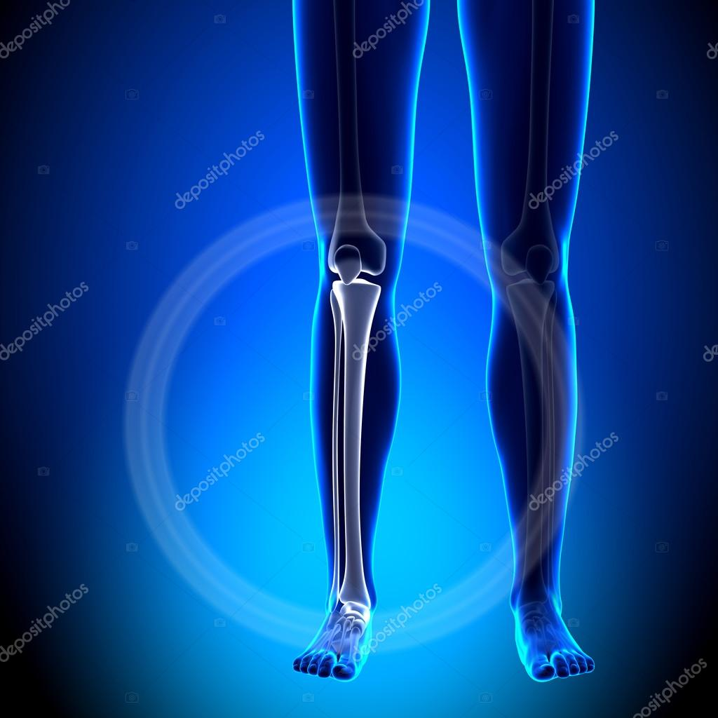 Female Tibia, Fibula - Anatomy Bones — Stock Photo © decade3d #58731889