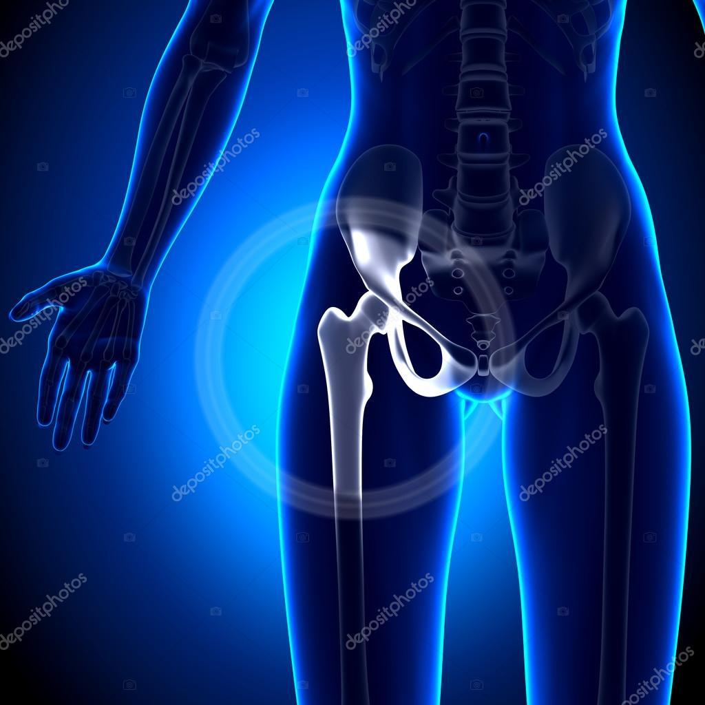 Articulación de la cadera femenina - anatomía de huesos — Fotos de ...