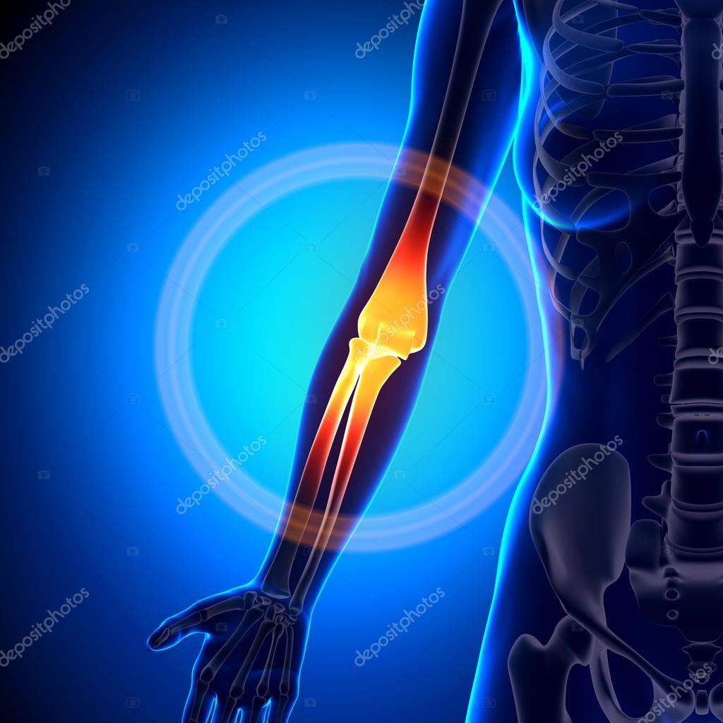Female Elbow - Anatomy Bones — Stock Photo © decade3d #58734761