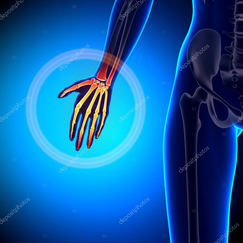 Palma femenino - anatomía de huesos — Fotos de Stock © decade3d ...
