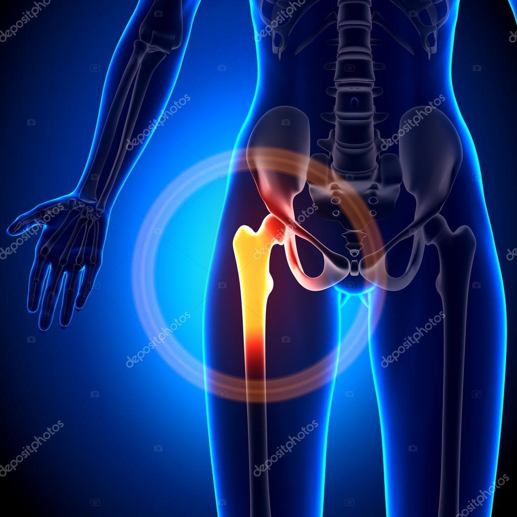 Weibliche Hüftgelenk - Anatomie Bones — Stockfoto © decade3d #58738055