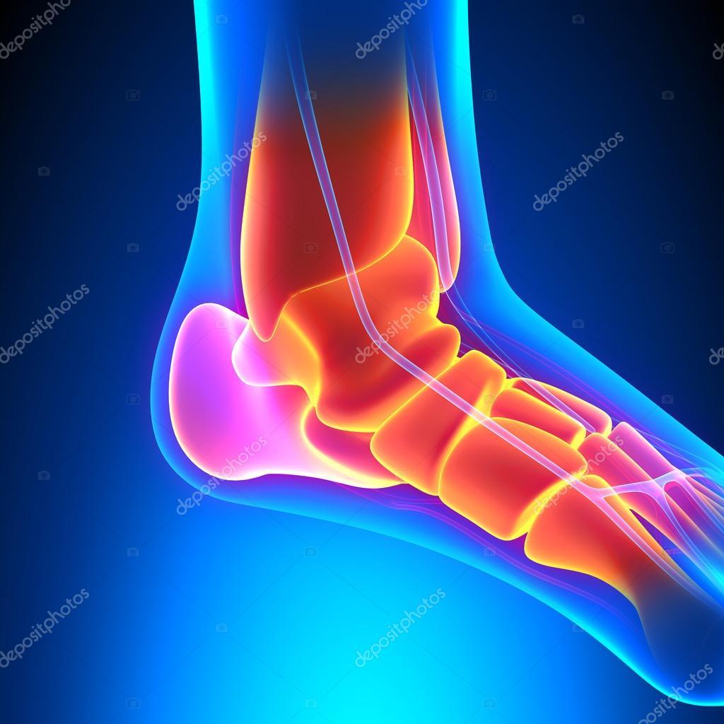 Ankle Bones Anatomy - Pain concept — Stock Photo © decade3d #64688963