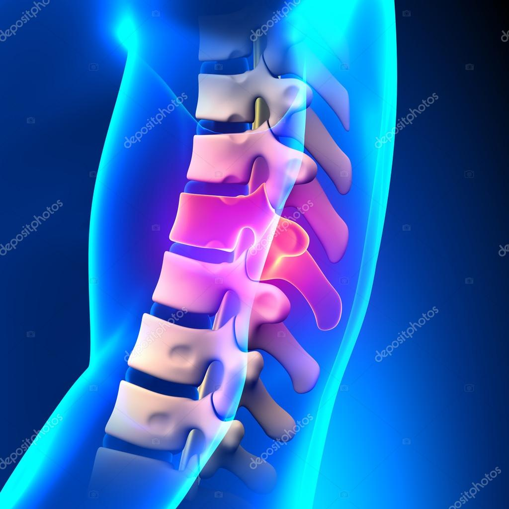 T9 Disco-anatomía de la espina dorsal torácica — Foto de stock ...