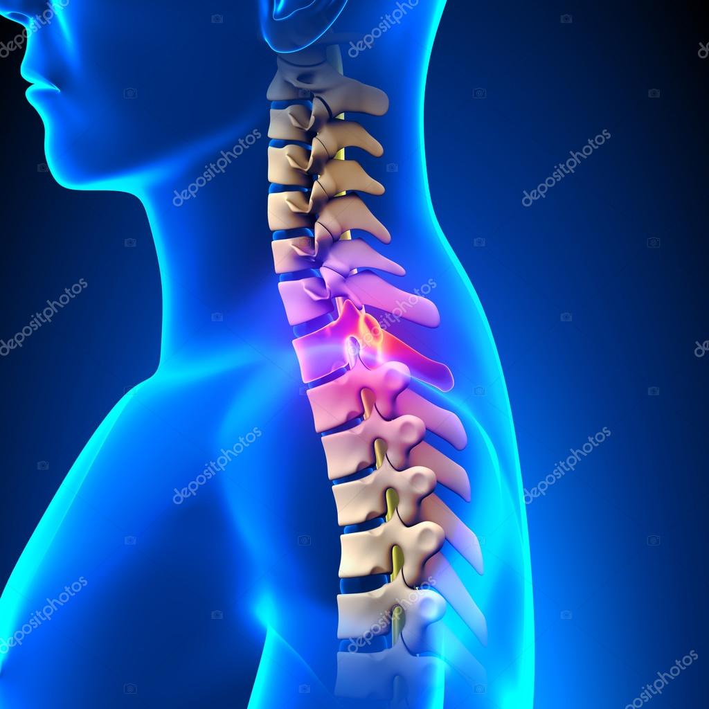 T1 Disco-anatomía de la espina dorsal torácica — Foto de stock ...