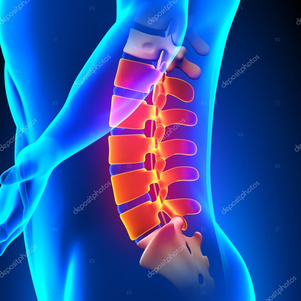Concepto de anatomía de columna, dolor lumbar — Foto de stock ...