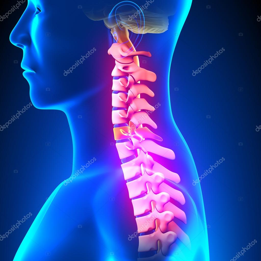 C6 Disc Cervical Spine Stock Photo Decade3d 64689203