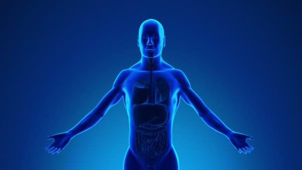 Anatomie člověka plíce - lékařské X-Ray skenování