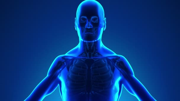 Anatomy of Human Thyroid - Medical X-Ray Scan
