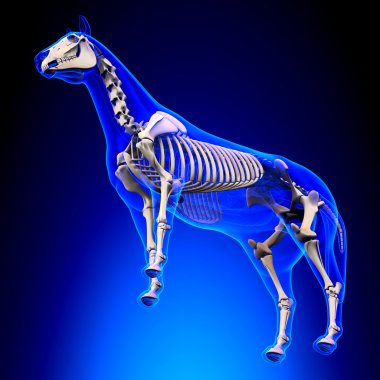 Horse Ligaments and Joints Tendons