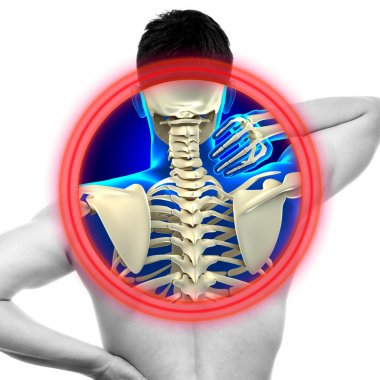 Neck Pain Cervical Spine isolated on white - REAL Anatomy concep