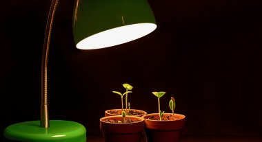 Three Young Sprouts With Grow Lamp