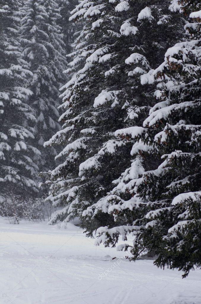 winter scenery, Haute savoie, France