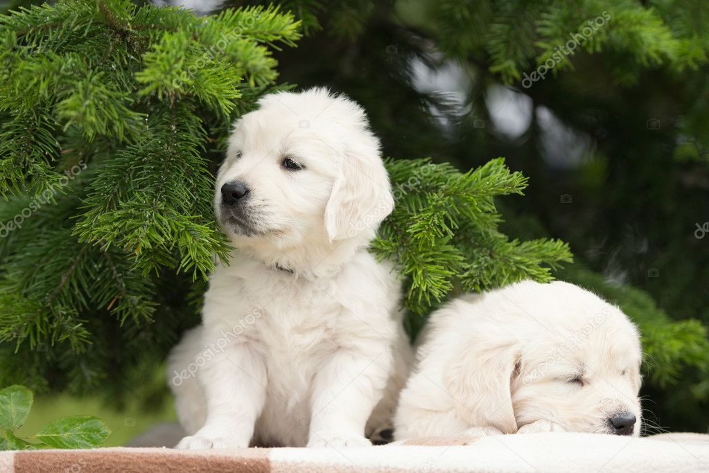 Скачать Обои Собак