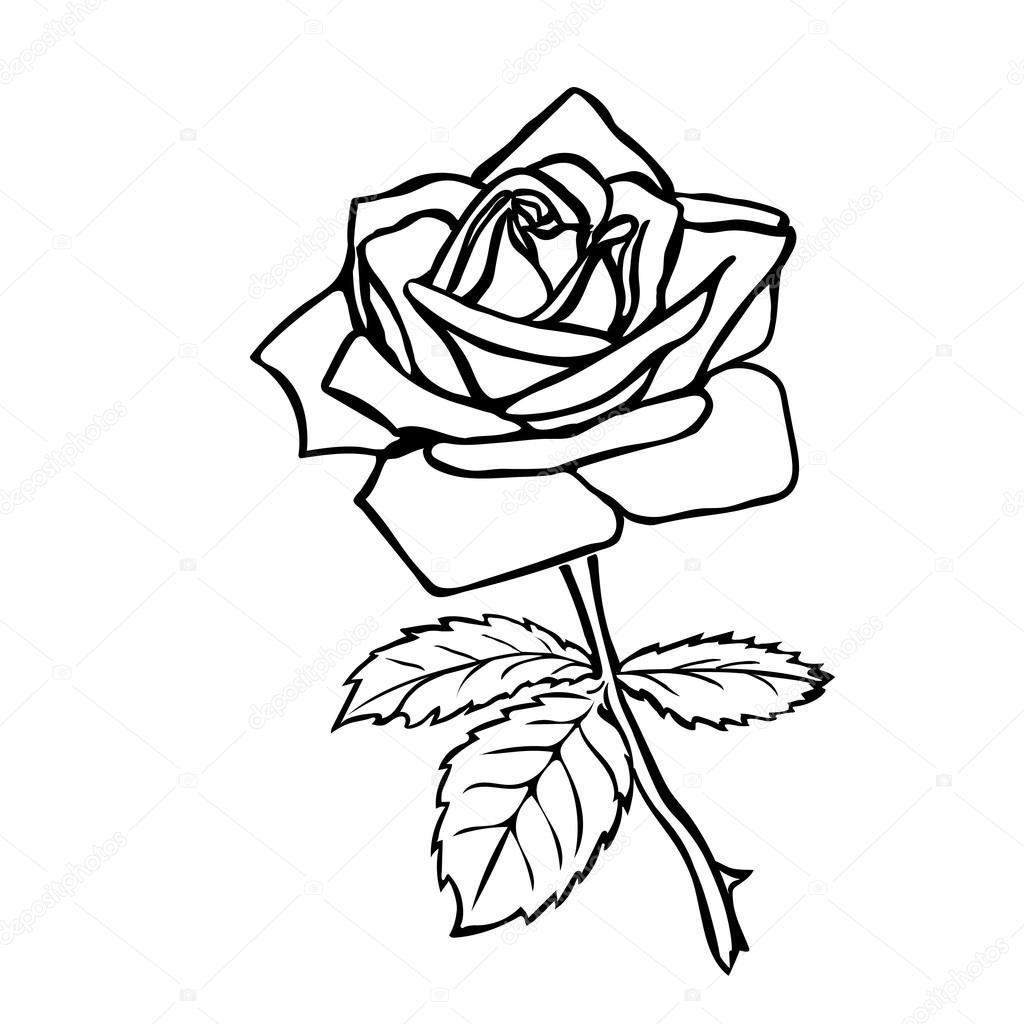 Fotos Dibujo De Rosa Dibujo Rosa Vector De Stock Likka 65470239