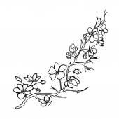 větvička Třešňové květy