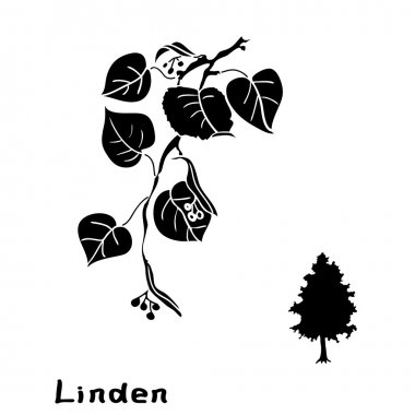 Set linden branches with leaves