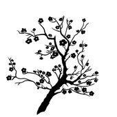 Fényképek gally szilva mei virágok