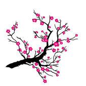 Fotografie Japanese plum blossom