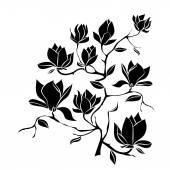 Fotografie Kvetoucí větve Magnolia na bílém pozadí vektorové ilustrace