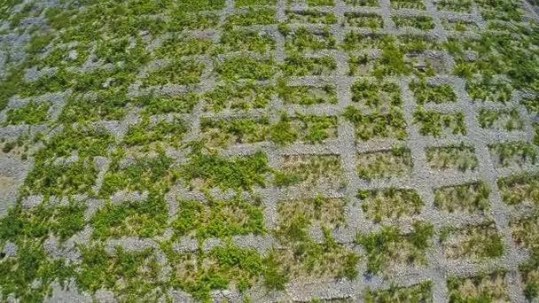 Primošten vinice, letecký snímek