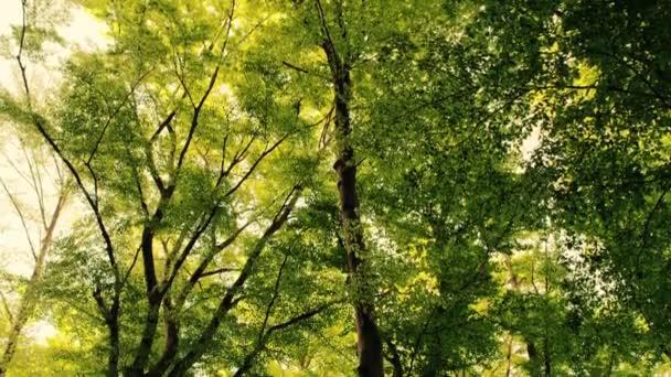 zelený Les v Záhřebu