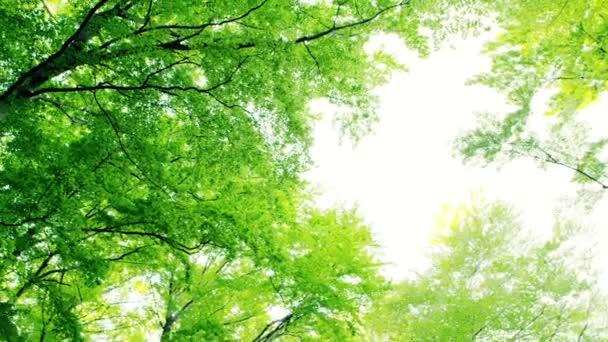 zelený Les stromů