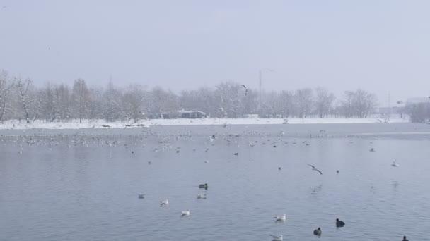 Záhřeb jezera jarun v zimním období