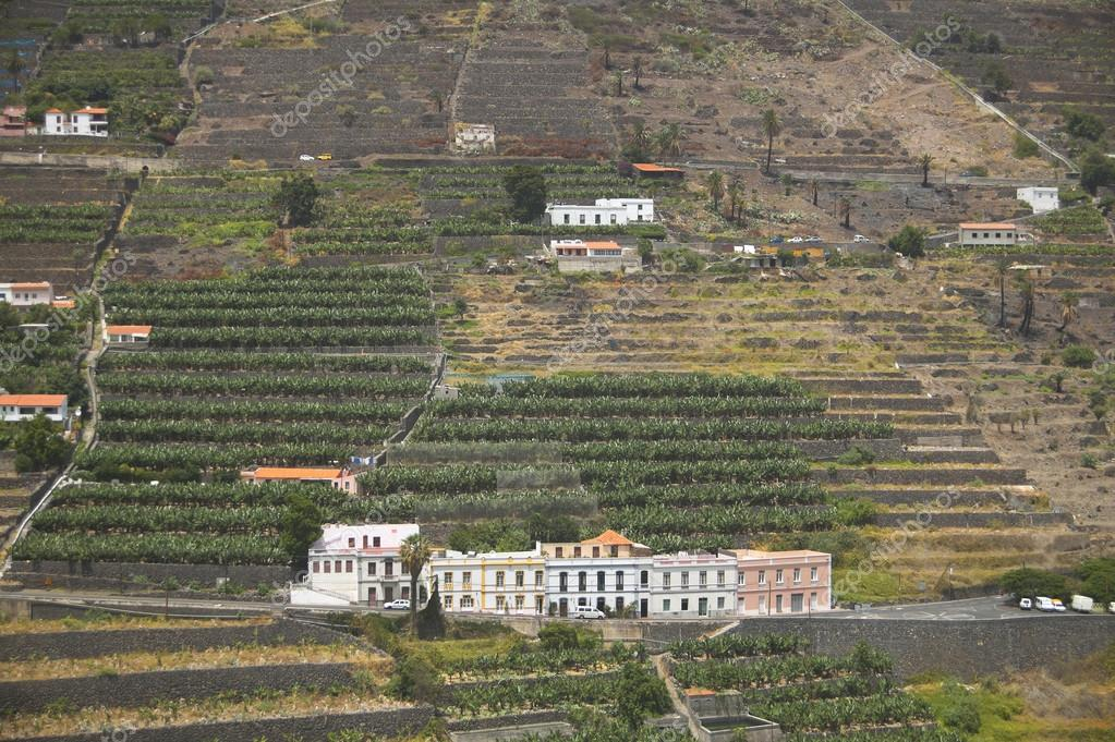 Banana tree plantation in the mountainside. Gomera. Canary Islan