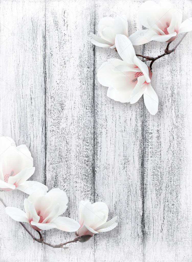 Magnolia Flowers On Background Of Shabby Wooden Planks Stock Photo