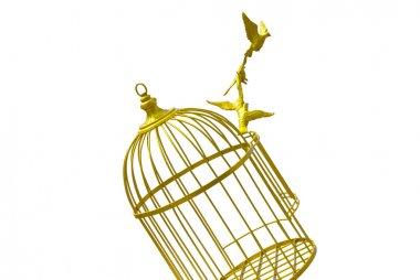 art empty bird golden cage isolate background