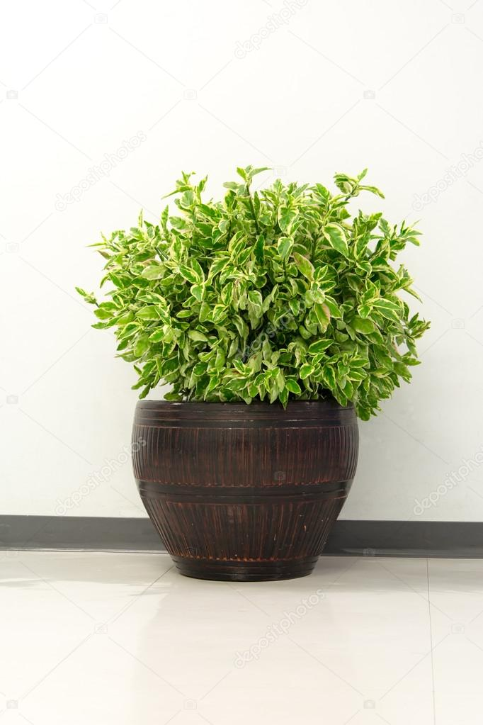 plant in office building