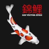 Photo Koi fish