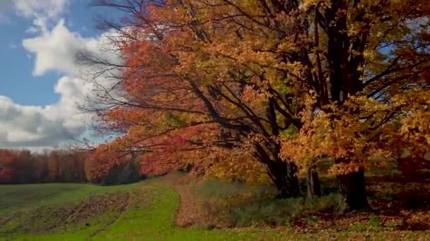 An autumn maple forest surrounds a meadow with green grass and protects it from the mountain winds