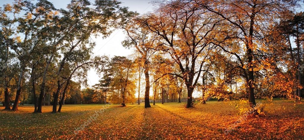 Autumn panorama in park