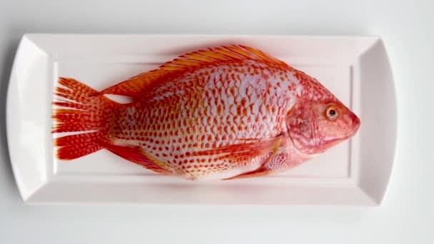 Ryba je na desce