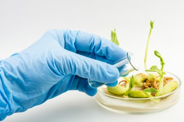 Workplace on laboratory for biotecnology test. Scientist holding samples of plants