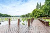 Okouzlující Západního jezera v Hangzhou