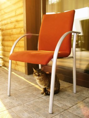 Cat is sitting on porch in the summer day