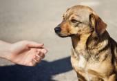 Dětské ruce a osamělý zatoulaný pes