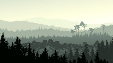 Wild coniferous wood in green tone.